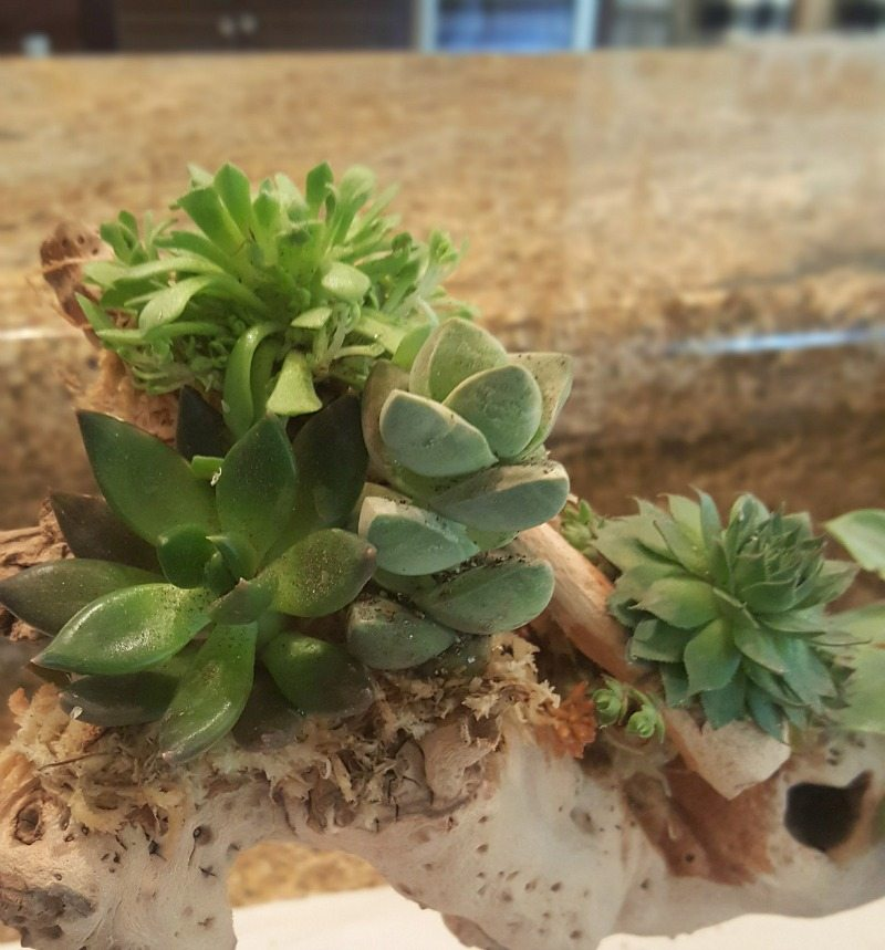 Succulent planter easy DIY project