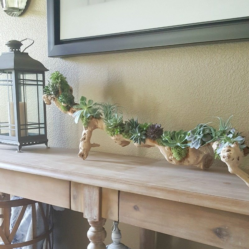 DIY succulent driftwood project tutorial