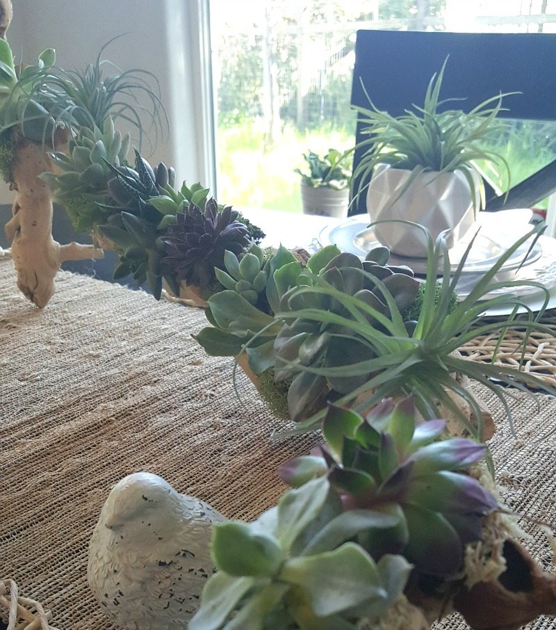 Succulent DIY driftwood planter tutorial