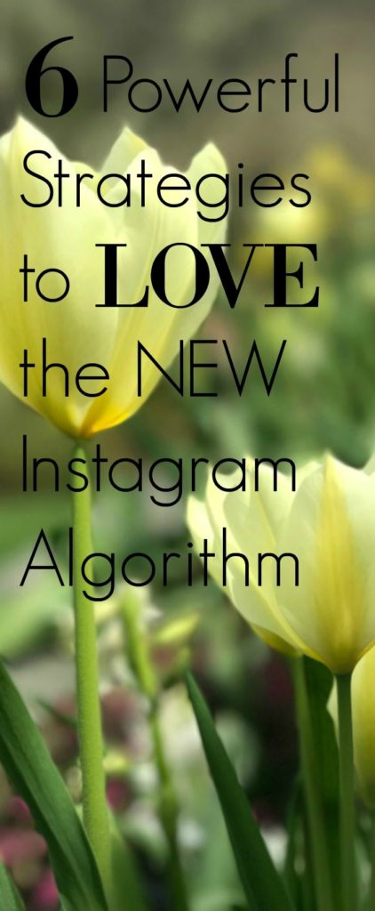 new instagram algorithm strategies