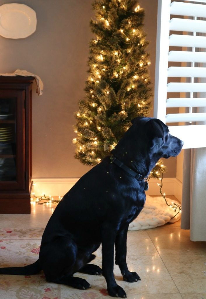 Design Festive Table for Christmas with Rocky the black lab puppy