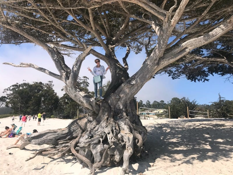 Jodie decides to climb a tree on the beach in Carmel