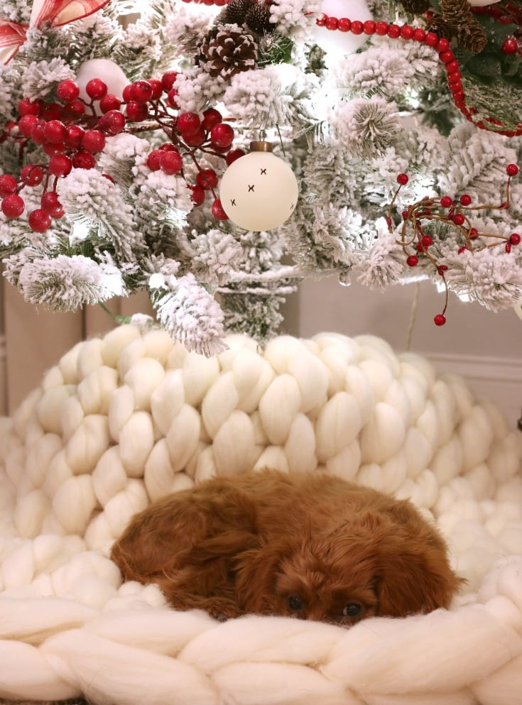 Christmas home puppy pose