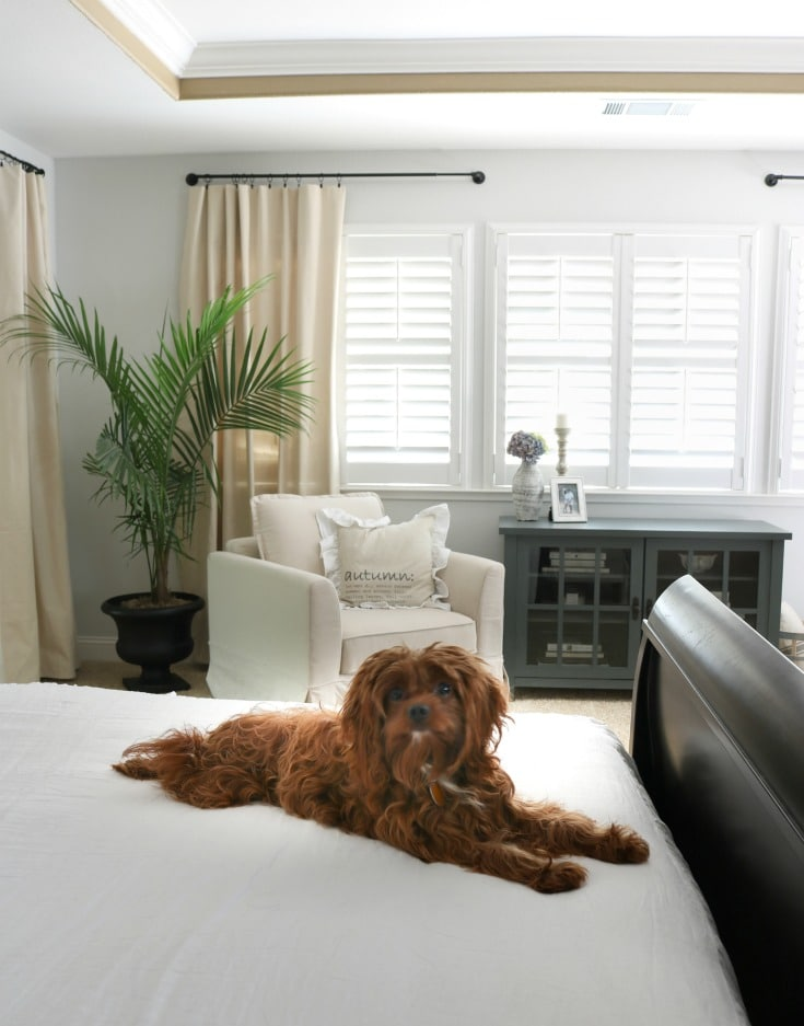Puppy and new decor is inviting and relaxing room