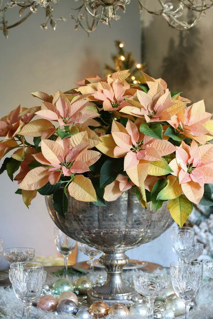 natural poinsettias in a vintage silver urn as a centerpiece with vintage ornaments and crystal glasses