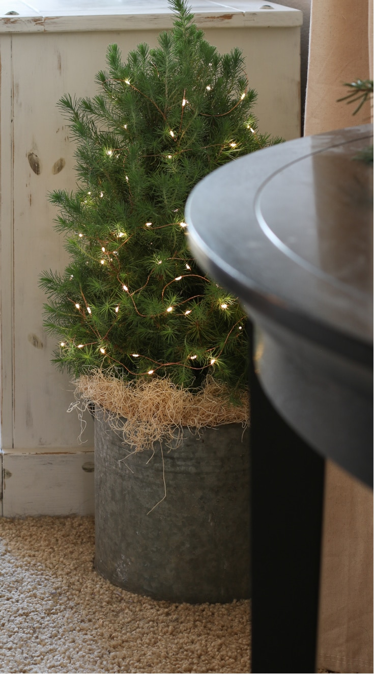 miniature Christmas tree in corner with twinkle lights